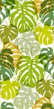 Seamless vector pattern of greenery leaves Monstera. Exotic tropical repeat ornament. Seamless vector pattern of greenery leaves Monstera. Exotic tropical Stock Photo