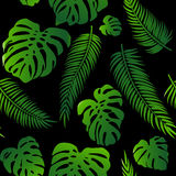 Seamless vector pattern of greenery leaves monstera and palm. Exotic tropical repeat ornament. Royalty Free Stock Photo