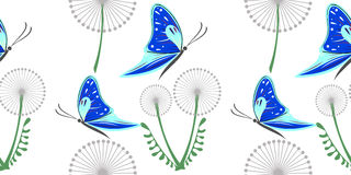 Seamless vector pattern with grey dandelions and blue butterflies on the white background Royalty Free Stock Images
