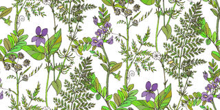 Seamless vector pattern of herbs and flowers Stock Photo