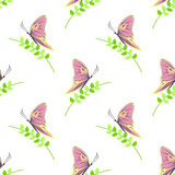 Seamless vector pattern with insects, symmetrical background with colorful butterflies and branches with leaves over light backdro Stock Photography