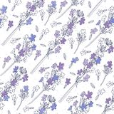 Seamless vector pattern with lavender flowers. Floral  illustration on white background. Floral background with lavender flowers Stock Image