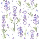 Seamless vector pattern with lavender flowers. Floral  illustration on white background. Floral background with lavender flowers Royalty Free Stock Photo