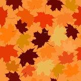 Seamless vector pattern of maple leaves. Stock Image