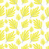 Seamless vector pattern Mimosa. Seamless pattern yellow flowers on a white background royalty free illustration