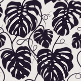 Seamless vector pattern of monochrome leaves Monstera. Exotic tropical repeat ornament. Royalty Free Stock Images