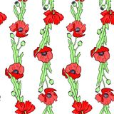 Seamless vector pattern with poppy flowers Stock Images