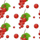 Seamless vector pattern of red currant fruit. White background with red currant Stock Images