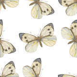 Seamless vector pattern. Watercolor butterfly Stock Image