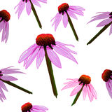 Seamless VECTOR pattern: yellow flowers on white, echinacea. Stock Photography