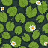 Seamless vector pond texture with white flowering water lilies and green leaves Royalty Free Stock Image