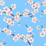 Seamless vector spring pattern from the branches of a blossoming apple tree with pink petals. Against the blue sky Royalty Free Stock Photo