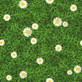 Seamless vector texture of green meadow grass with daisies Royalty Free Stock Images