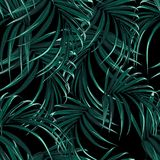Seamless vector tropical pattern with dark green palm leaves on black background. Tropical background with jungle plants. Seamless vector tropical pattern with royalty free illustration