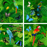 Seamless vector tropical rainforest Jungle background with parrots. Butterflies, snake, frog and motmot Stock Photos