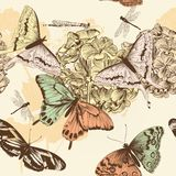 Seamless vector wallpaper pattern with butterflies in vintage st Royalty Free Stock Photo