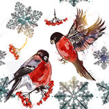 Seamless vector wallpaper pattern in watercolor style. Beautiful wallpaper pattern in watercolor style with bullfinches  rowan and snowflakes on a Christmas Royalty Free Stock Photos