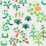 Seamless vegetable garden pattern. Vector Royalty Free Stock Images