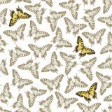 seamless vektor för fjärilsprydnad Arkivbild