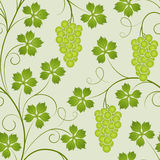 Seamless from vine. Seamless from green  vine(can be repeated and scaled in any size Stock Photo