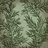 Seamless vintage background with rosemary Stock Photography