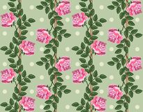 Seamless vintage light background with roses. Floral pattern Royalty Free Stock Images