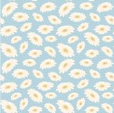 Seamless vintage pattern hand drawn white daisy flower. Floral nature background vector summer design plant decoration wallpaper spring leaf blossom art textile royalty free stock images