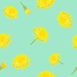 Seamless vintage style with a dandelion flower. Royalty Free Stock Image