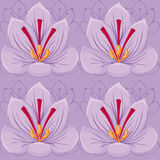 Seamless Violet background.saffron flowers. seamless pattern. Royalty Free Stock Photo