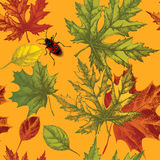 Seamless wallpaper with autumn leaves and beetle, Royalty Free Stock Photo