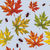 Seamless wallpaper with autumn maple leaves and red beetles, han Royalty Free Stock Photography