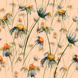 Seamless wallpaper with Camomile flowers Stock Images