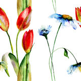 Seamless wallpaper with Daisies and Tulips flowers. Watercolor painting Stock Images