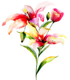 Seamless wallpaper with Lily flowers. Watercolor illustration Royalty Free Stock Photos