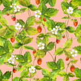 Seamless wallpaper with a lot of wild forest strawberry berry. Watercolor botanical drawing on pink background Stock Photos
