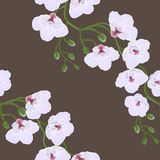 Seamless wallpaper with orchid flowers Royalty Free Stock Photos
