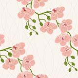 Seamless wallpaper with orchid flowers Stock Images