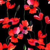 Seamless wallpaper with Poppy flowers Stock Image