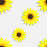 Seamless wallpaper with sunflowers. Beautiful seamless background for your business Stock Images