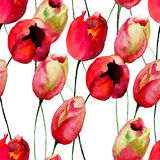 Seamless wallpaper with Tulips flowers Royalty Free Stock Image