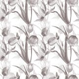 Seamless wallpaper with Tulips flowers. Watercolor painting Stock Photos
