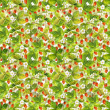 Seamless wallpaper with wild garden red strawberries berries, leaves and flowers. Watercolor art. Seamless repeated pattern with field of wild forest strawberry Stock Photo