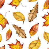 Seamless watercolor autumn pattern of leaves oak, maple, elm. Watercolour background of yellow, orange and red leaf, hand painted botanical illustration for Royalty Free Stock Photos