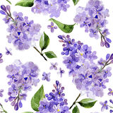 Seamless watercolor background lilac flowers Royalty Free Stock Photography