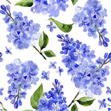 Seamless watercolor background lilac flowers Royalty Free Stock Image