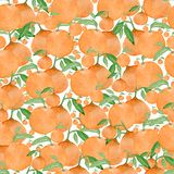 Seamless watercolor background with oranges and tangerines, hand watercolor illustration royalty free illustration