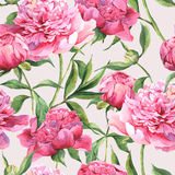 Seamless watercolor background with pink peonies Royalty Free Stock Image