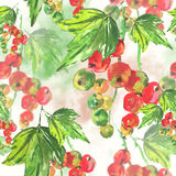 Seamless watercolor background with red currant Royalty Free Stock Photos