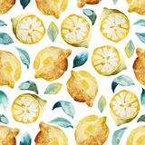 Seamless watercolor background of yellow lemon and leaves. Seamless watercolor pattern of yellow lemon and leaves  on white background Royalty Free Stock Images