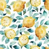 Seamless watercolor background of yellow lemon and leaves. Seamless watercolor pattern of yellow lemon and leaves  on white background Royalty Free Stock Photography